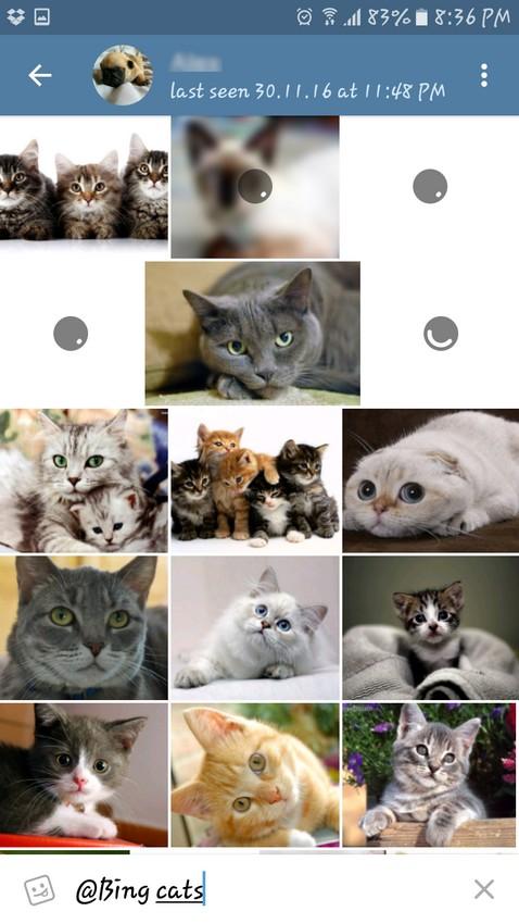 Bing Cats